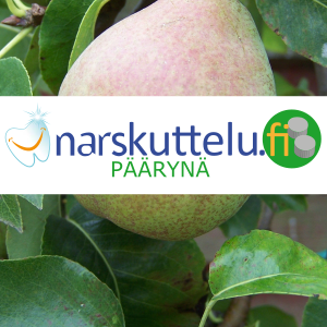 Xylitol with natural pear flavor, 100 g to 10 kg.